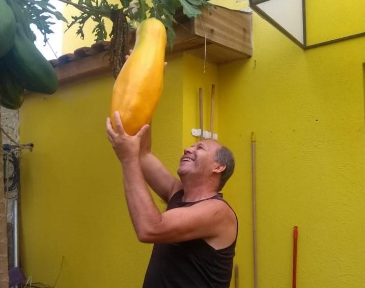Cedida - Cícero plantou o pé de mamão no quintal de sua casa