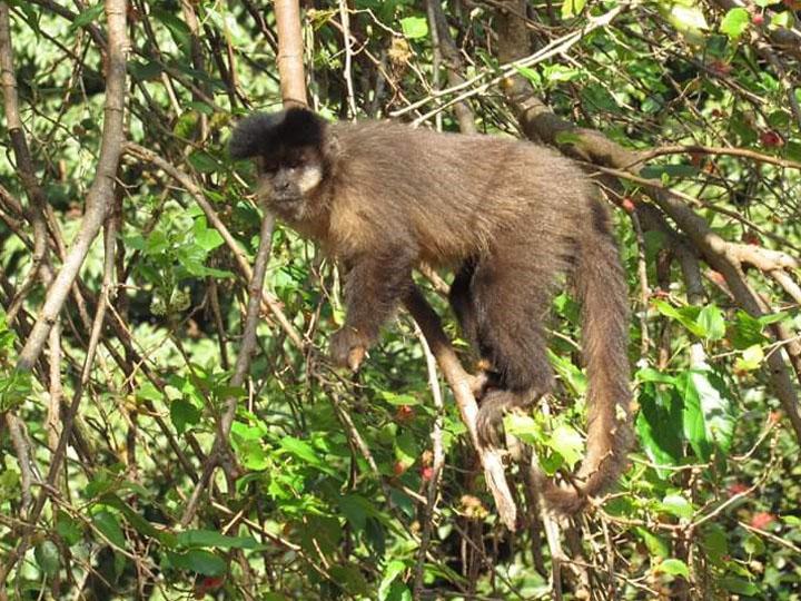 Secretaria Municipal de Turismo - Prefeitura alerta população para não alimentar os animais de vida livre, como os macacos