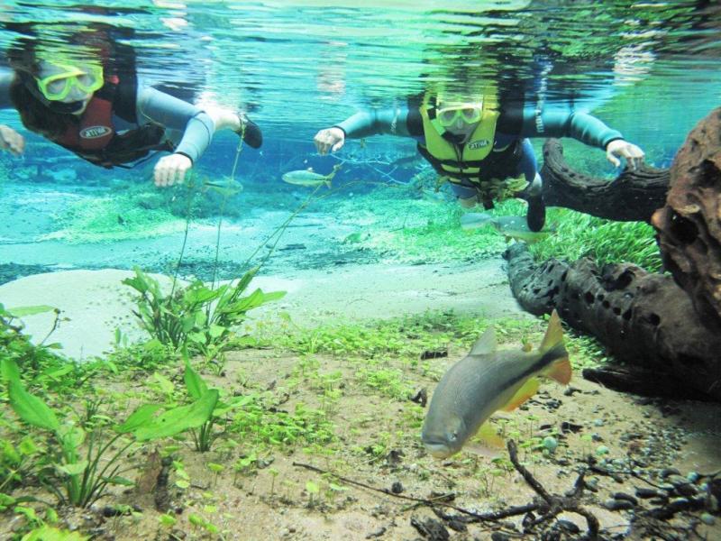 Piraputangas, dourados, piaus, corimbas e outros peixes aparecem para dar boas-vindas aos turistas