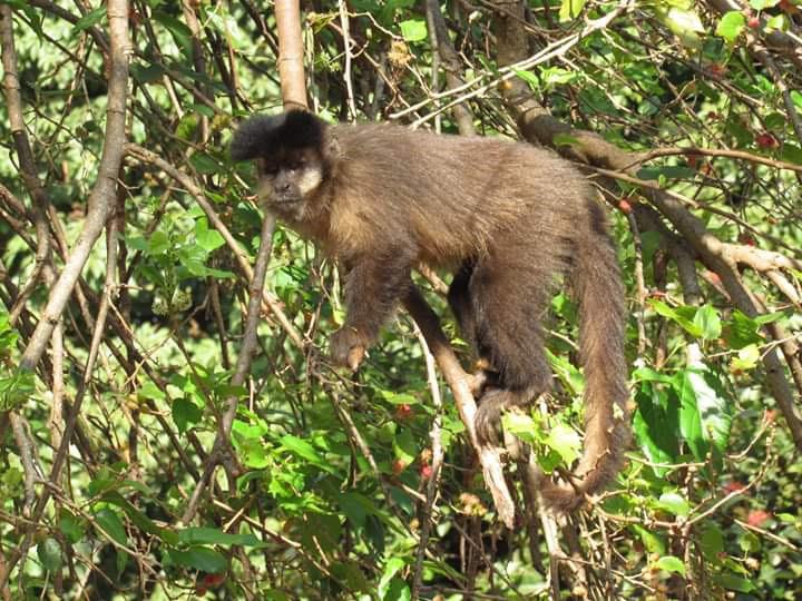 Arquivo - Após morte de 4 macacos, Prefeitura aguarda o resultado dos exames realizados