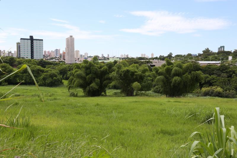 Isadora Crivelli - Mais de 200 mil árvores serão plantadas em APPs, como a da Rua Olívio Crepaldi