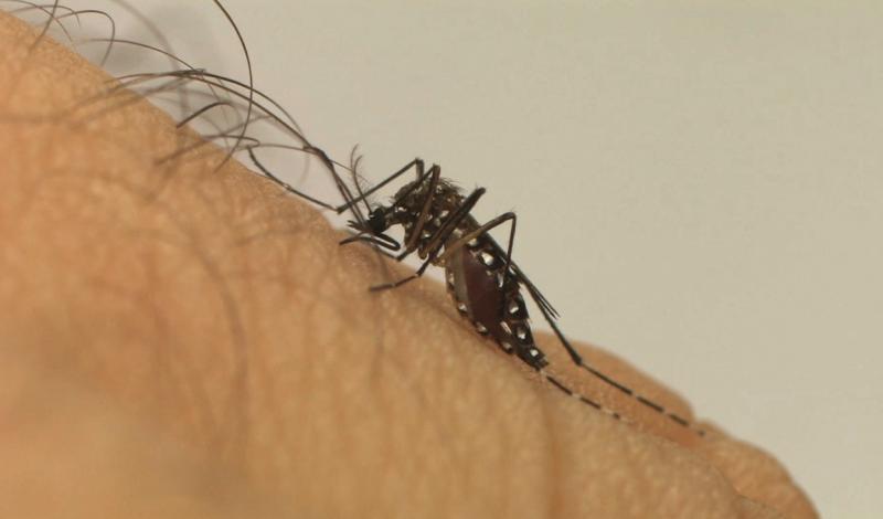 Fiocruz - Duas mortes por dengue hemorrágica foram confirmadas na região