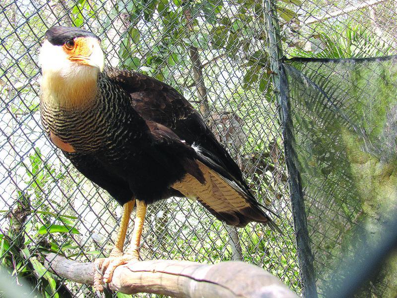 """Cedida: 124 espécimes de 24 espécies compõe """"Morada dos Pássaros"""""""