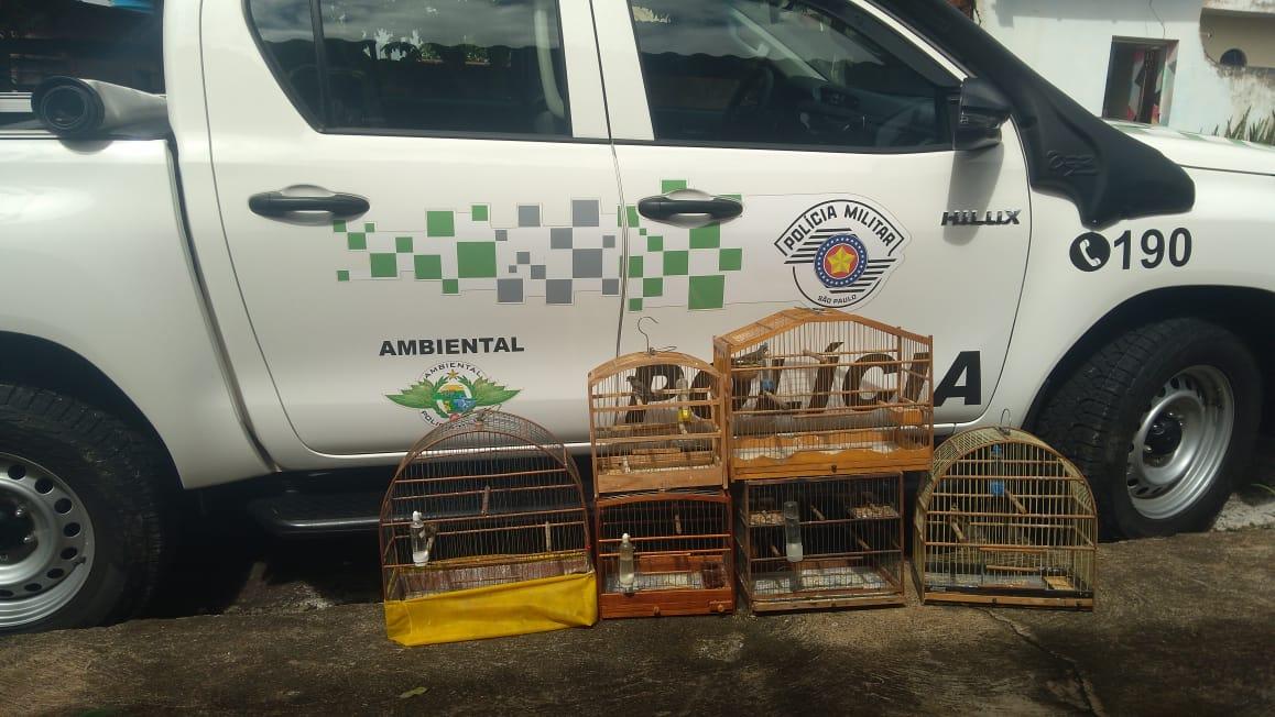 Polícia Militar Ambiental - Após apreensão, aves foram soltas em seu habitat natural