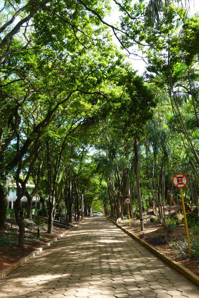 Foto: Esse corredor verde é um dos belos cenários do campus II da Unoeste