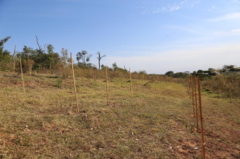 Mata do Calabreta no Balneário da Amizade de Presidente Prudente passa por reflorestamento