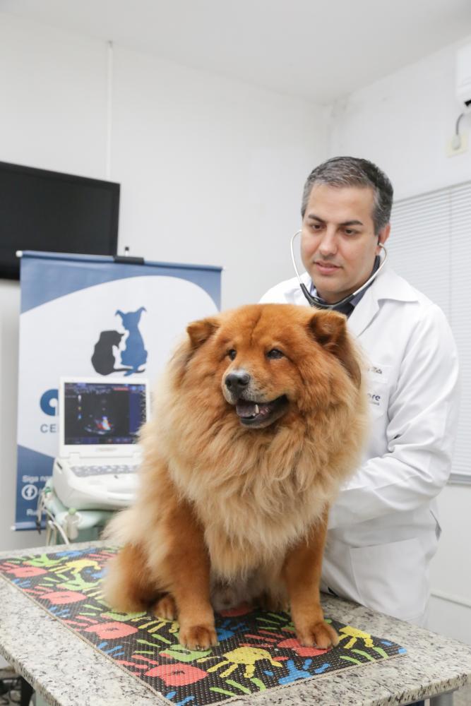 veterinário de presidente prudente fala sobre problemas cardíacos em pets