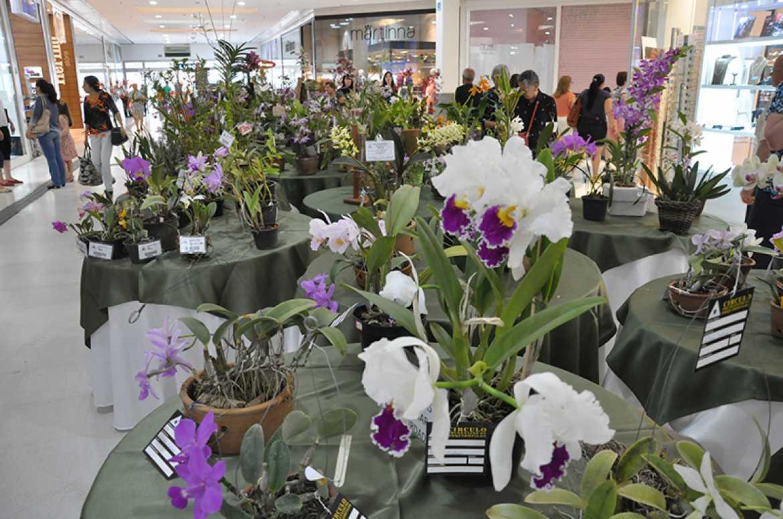 Foto: José Reis, Mais de 3 mil orquídeas estão em exposição no Parque Shopping de PP