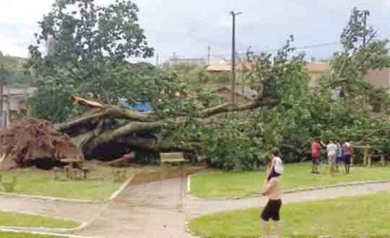 Aline Martins, Árvore caiu em área sem riscos, por não ser residencial, na 6ª