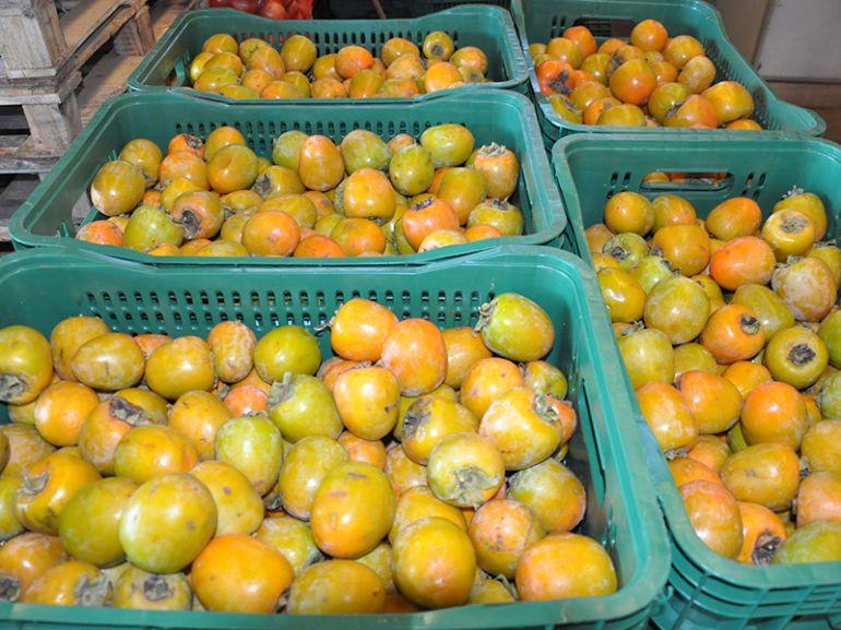 Caqui é uma das frutas mais procuradas nesta época do ano