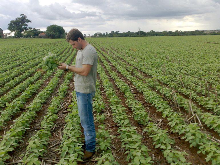 Arquivo - Produção de soja no EDR de PP representa 5% do total do Estado
