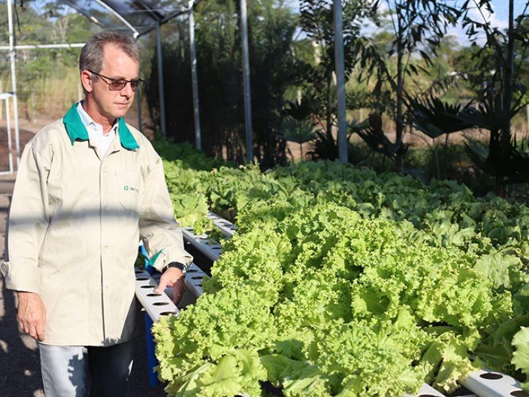 PRODUÇÃO O diretor da Ver Te Verde Ambiental, Junior Guadanuci, no viveiro de mudas, ervas e hortaliças