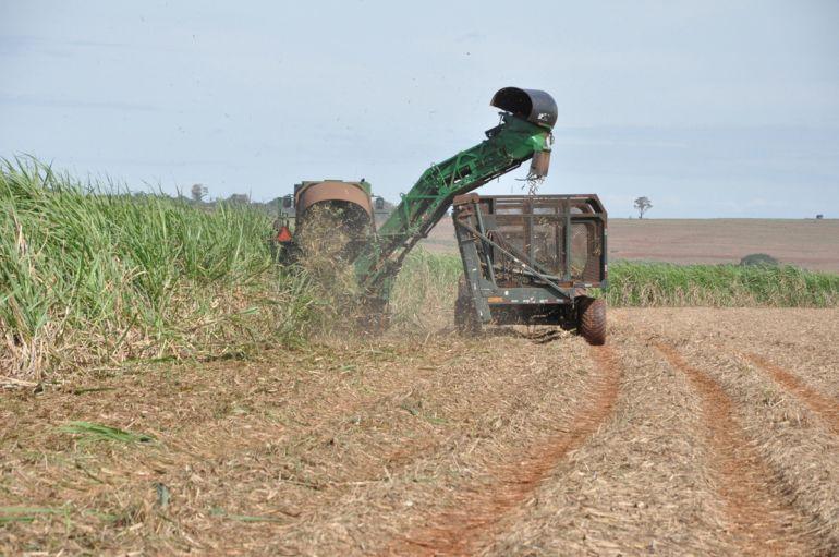 Arquivo - Safra da cana-de-açúcar favorece contratações e impulsionou variação positiva do mês passado