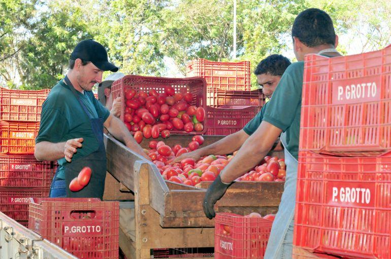 Arquivo - Comum na mesa dos brasileiros, tomate é um dos alimentos que mais possuem agrotóxicos
