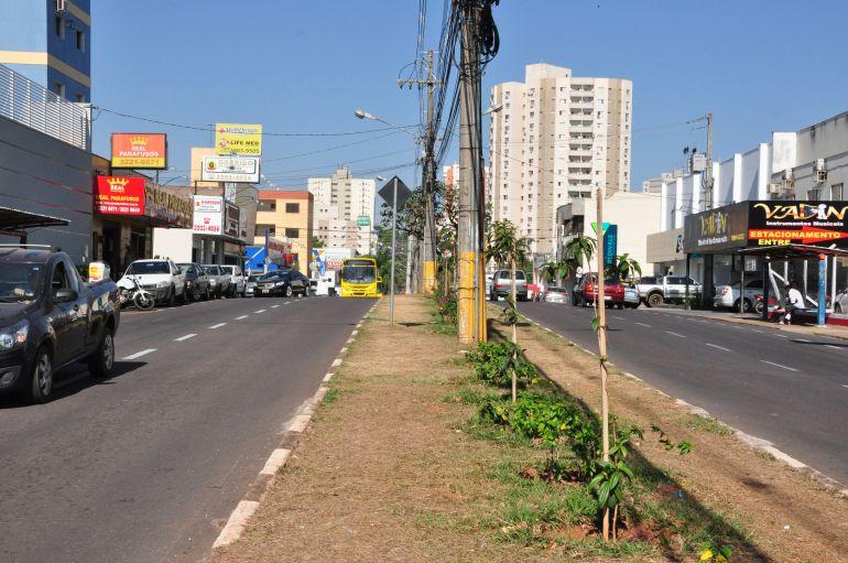 José Reis - Para Creci, Avenida Coronel José Soares Marcondes possibilita fluxo rápido