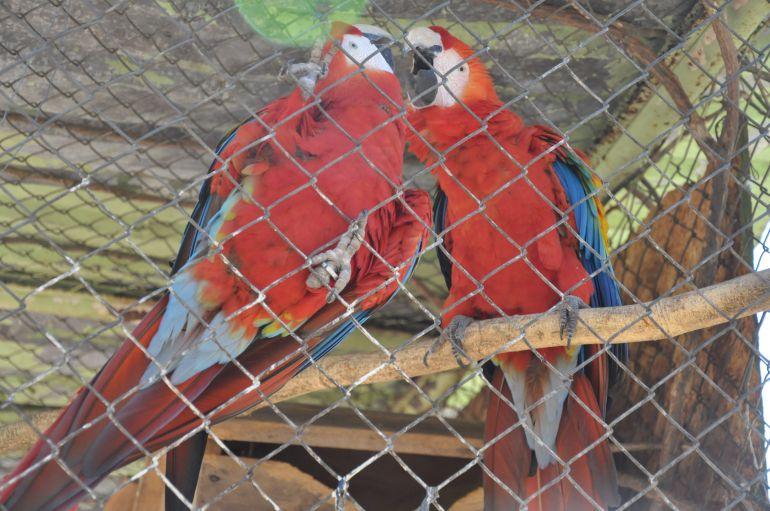 José Reis - Avessão consideradas os animais mais sensíveis ao tempo seco