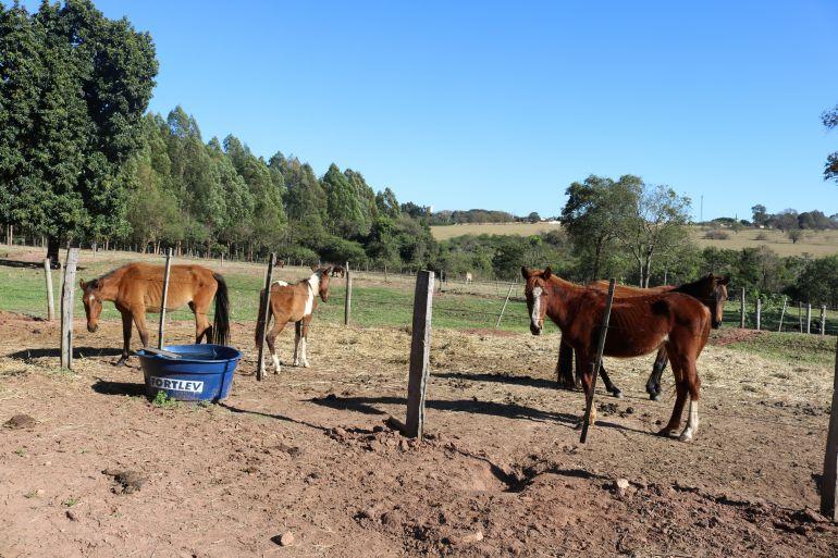 Prefeitura de Rancharia - Animais de grande porte, como cavalos e vacas, também são acolhidos pela instituição