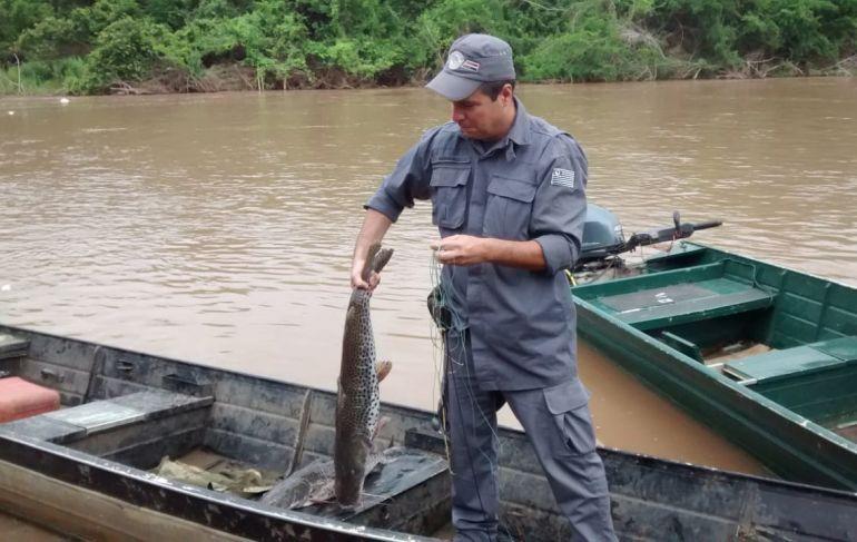 Polícia Militar Ambiental - Peixes foram soltos no Rio Aguapeí, após fiscalização da Polícia Militar Ambiental