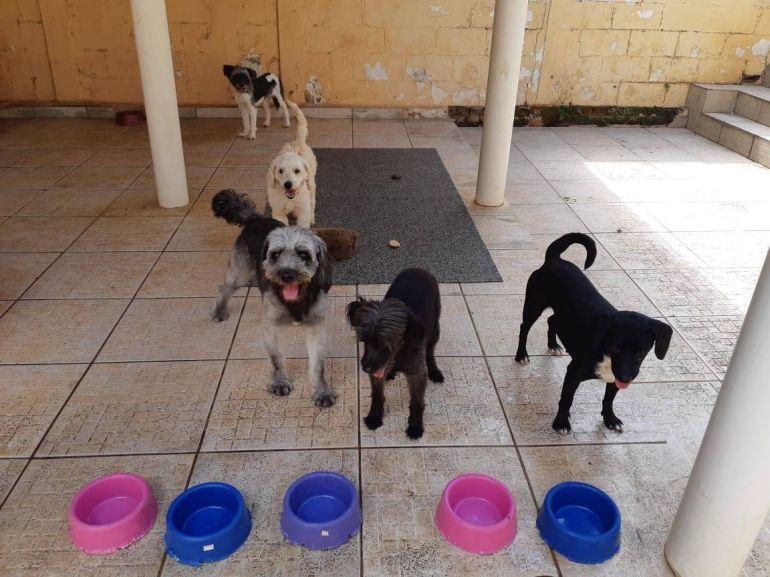 Arquivo pessoal/Cedida - Alimentação e abrigo  a animais são frutos de doação e ajuda de voluntários