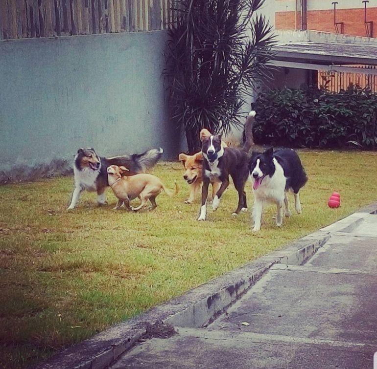 Cedida/Bárbara de Barros - Além de hospedagens, hotéis garantem atividades lúdicas para os animais de estimação