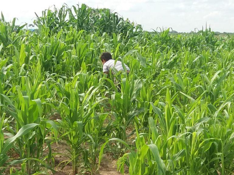 Cedida/Josué Roberto da Silva - Moradores da Fazenda Bandeirantes, em Paulicéia, promovem agricultura familiar